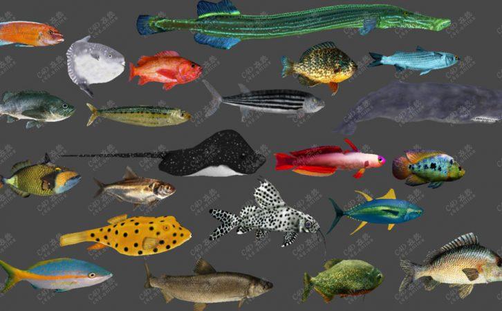 20条鱼类动物模型