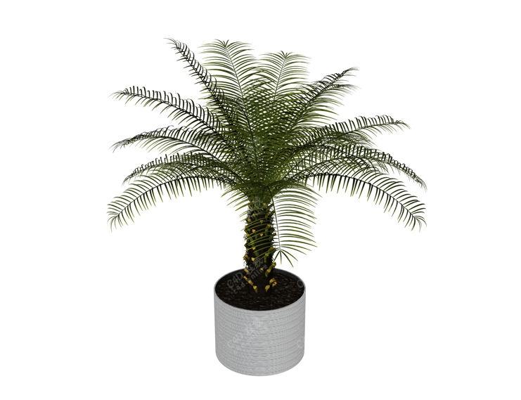 铁树绿植盆栽景观模型免费下载