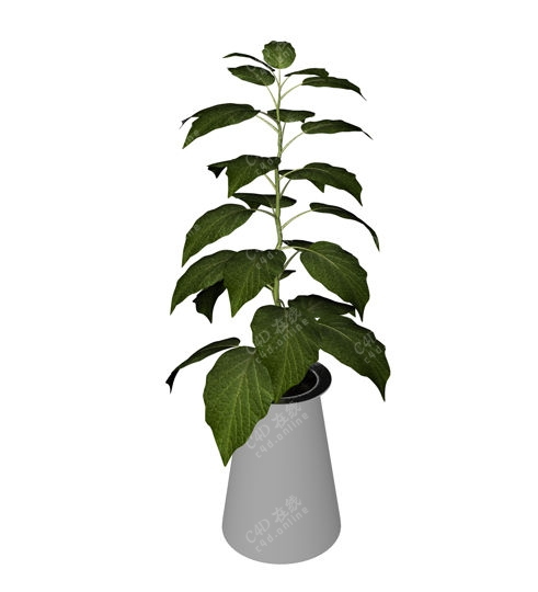 绿色植物盆栽绿植模型