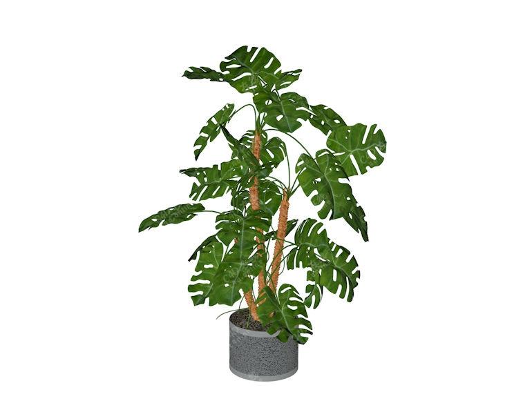 龟背竹植物盆栽绿植模型