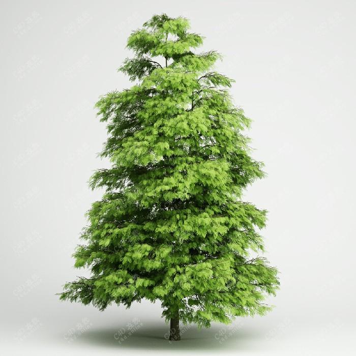 雪松绿色树木松树植物模型