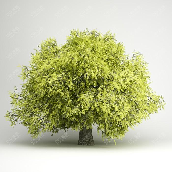 黄色树木植物树模型