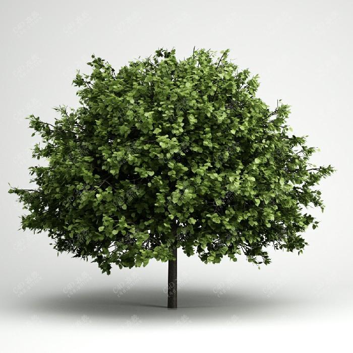 圆叶绿树绿植植物树木模型
