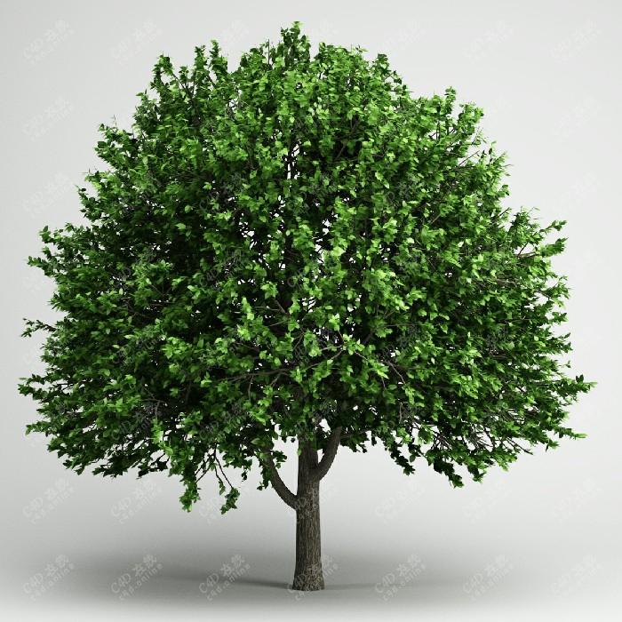 茂密叶子绿树植物绿植模型