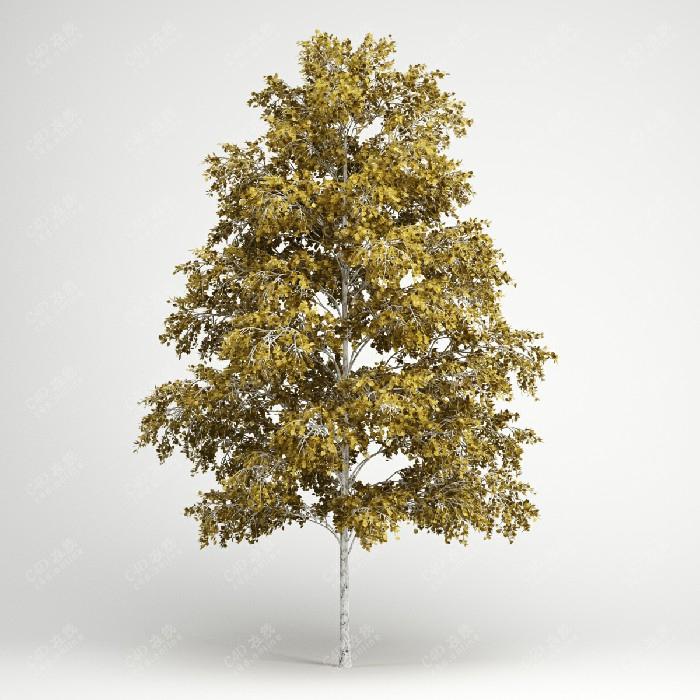 黄色树木行道树桦树大树植物模型