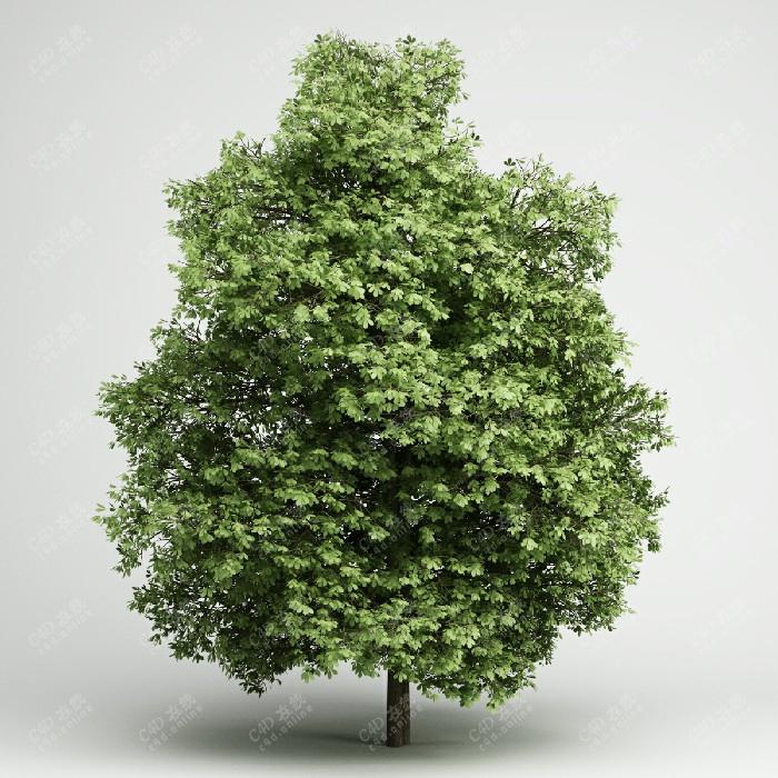 茂盛树木行道树绿色植物绿植模型