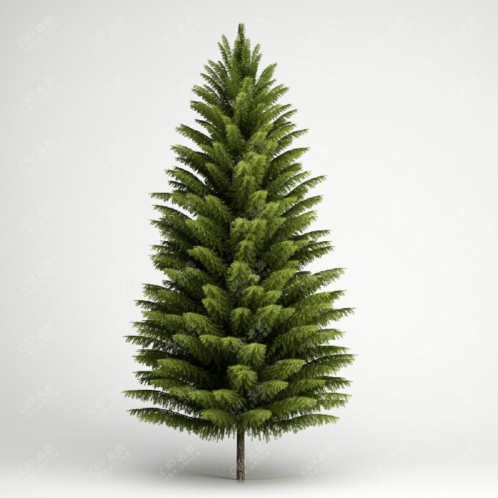 南洋杉树木绿植杉树行道树植物模型