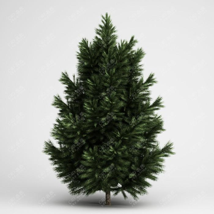 柏树松树绿植树木景观树植物模型
