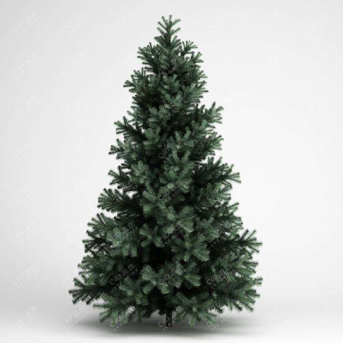 松树植物绿植树木模型
