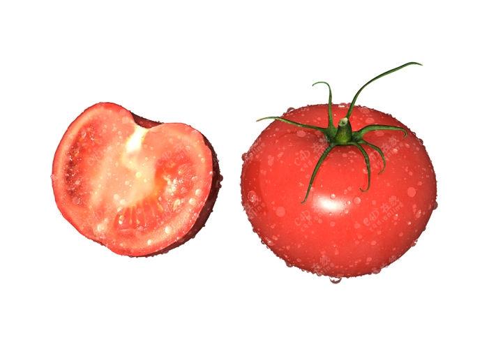 西红柿番茄蔬菜模型