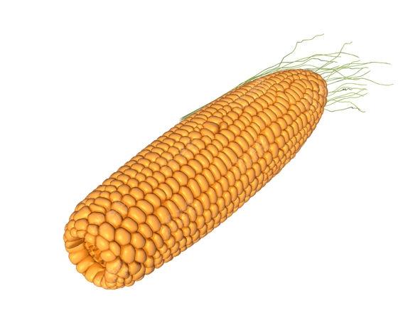 玉米蔬菜模型