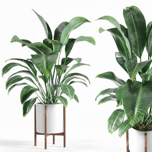 办公室绿植鹤望兰植物盆栽模型