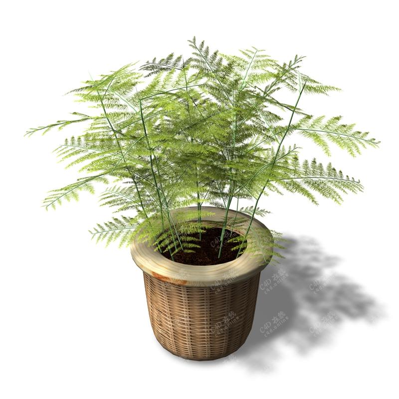 绿色竹篮盆栽植物模型