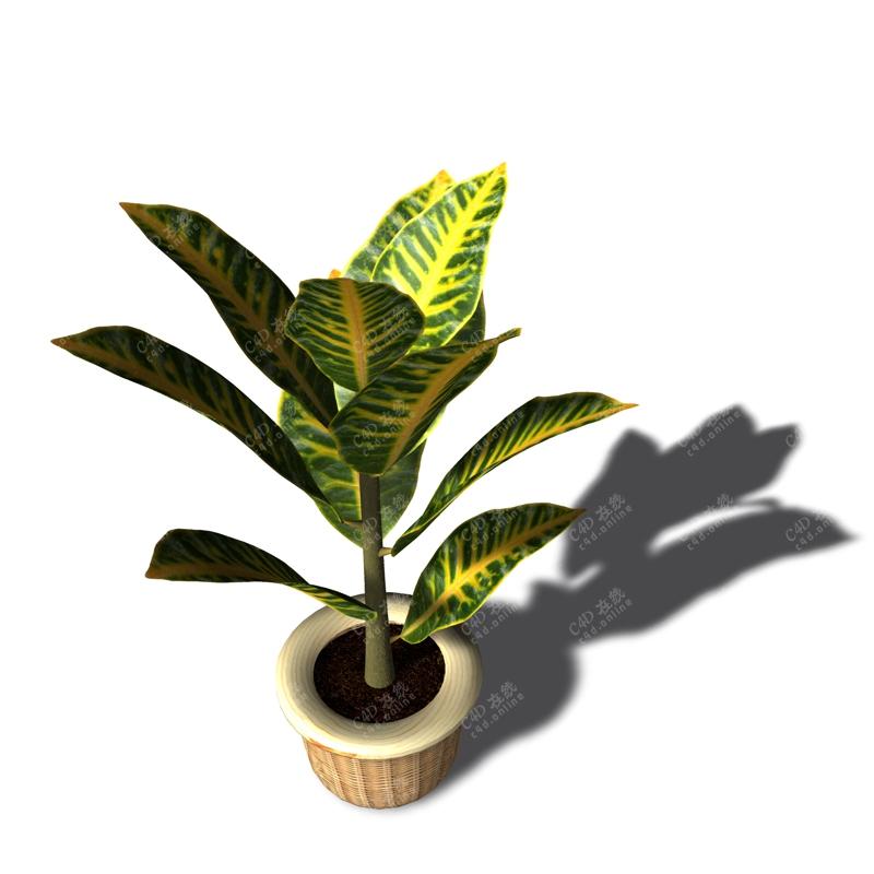 变叶木盆栽植物模型