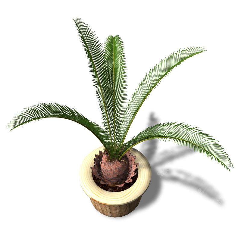 铁树苏铁盆栽植物模型