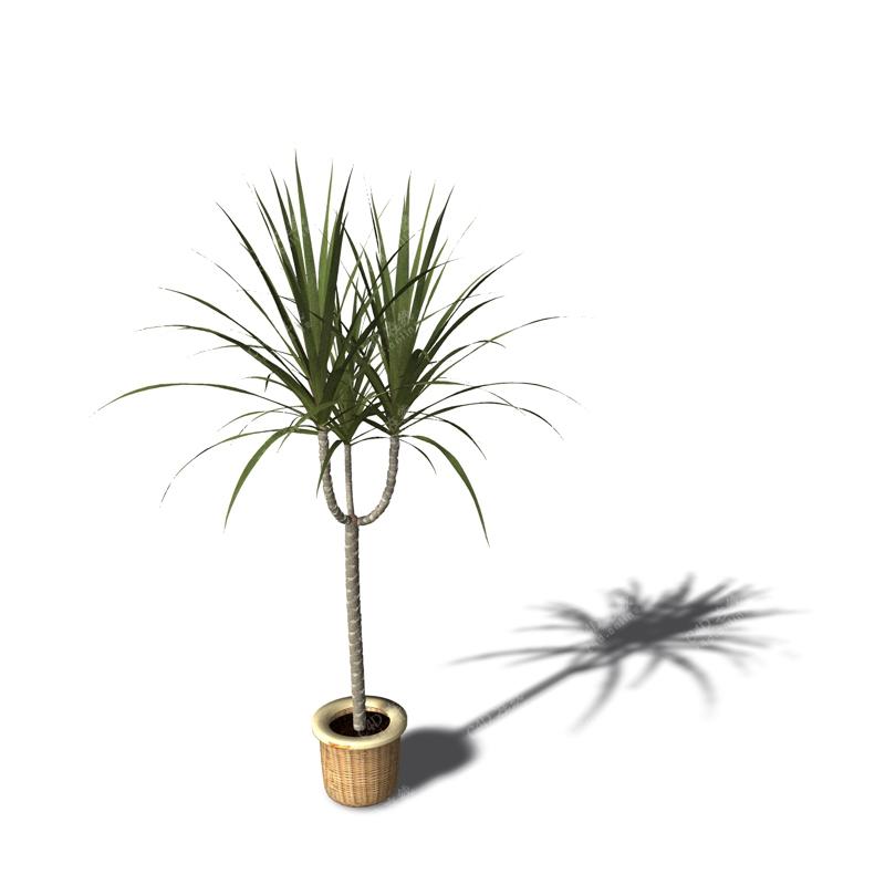 绿色盆栽植物模型