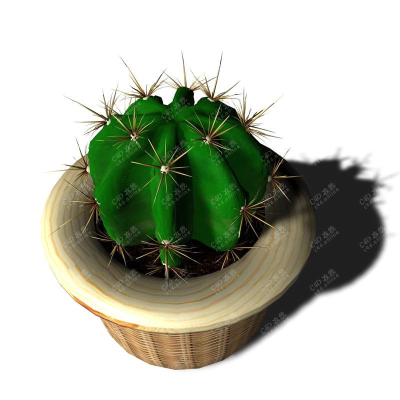 绿植仙人球盆栽植物模型
