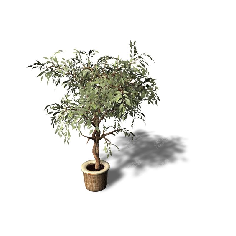 景观树盆栽植物模型