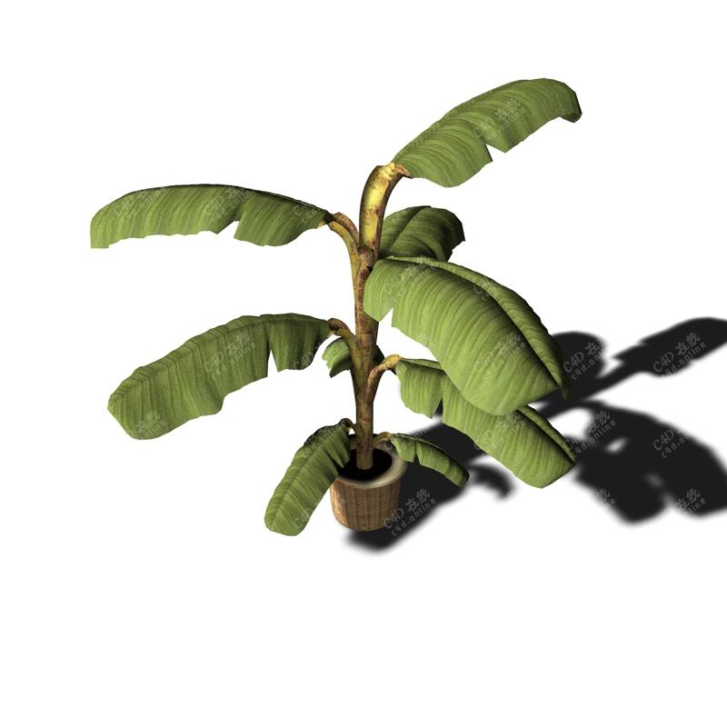 绿植芭蕉树植物模型