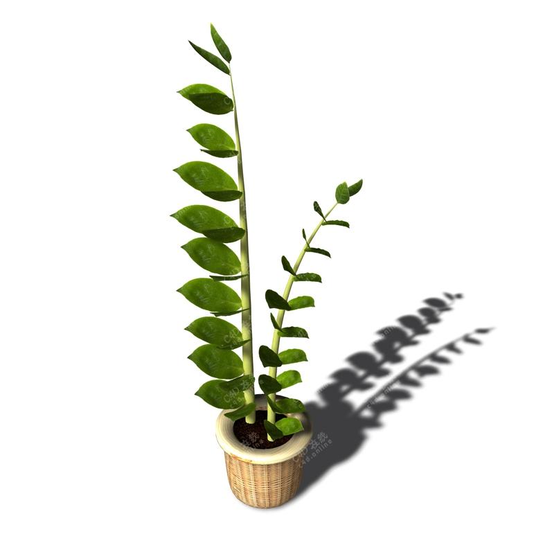 绿植植物模型
